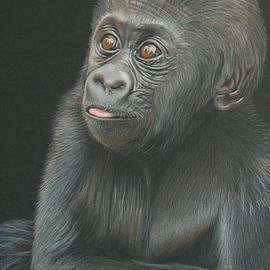 Jill Parry - A Look of Wonder - Baby Gorilla