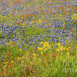 Bob Phillips - A Mix of Texas Wildflower Color