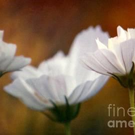 Michael Hoard - A Monet Spring