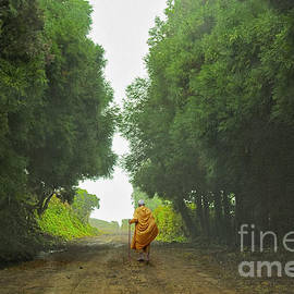 Ted Guhl - A Monk Walks Out of the Forest