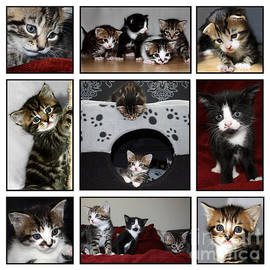 Terri  Waters - A Montage of Kittens