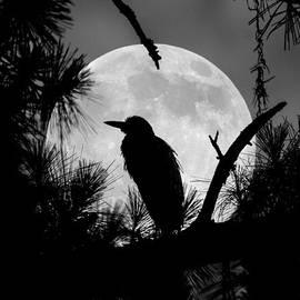 Jamie Anderson - A Night Heron