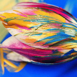 Jeff  Swan - A Painted tulip.