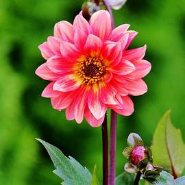 Cynthia Guinn - A Pink Flower