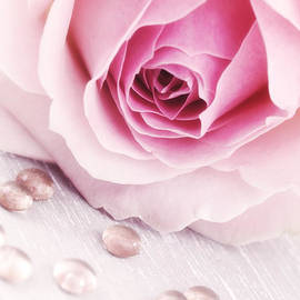 HJBH Photography - A Romantic Pink rose with drops