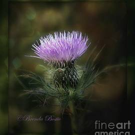 Brenda Bostic - A Prickly Beauty