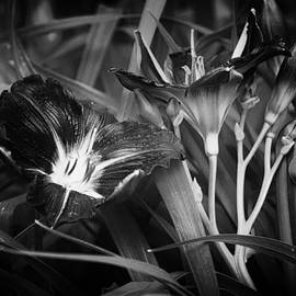 Belinda Greb - A Riot of No Color