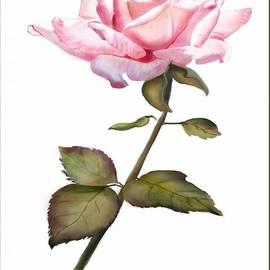 Joan A Hamilton - A Rose for You