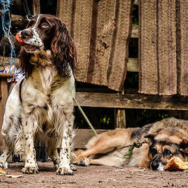 Stwayne Keubrick - A sad dog