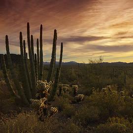Saija  Lehtonen - A Serene Sonoran Sunset