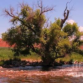 John Malone - A Single Tree at Tensleep Creek
