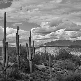 Saija  Lehtonen - A Sonoran Winter Day in Black and White