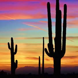 Saija  Lehtonen - A Southwest Saguaro Sunset