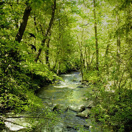Diane Schuster - A Spring Day At Lithia Creek