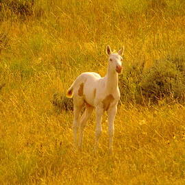 Jeff  Swan - A Spunky Colt At The Little Bighorn Battle Site