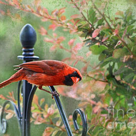 Debbie Portwood - A Startled North American Cardinal
