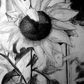 Jose A Gonzalez Jr - A Sunflower at Klinedale Farm PA