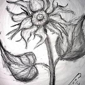 Jose A Gonzalez Jr - A Sunflower