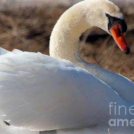 Kathy  White - A Swan