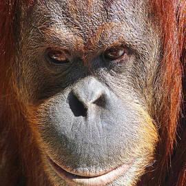 Margaret Saheed - A Thoughtful Orangutan