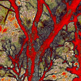 David Patterson - A Touch of Autumn Abstract