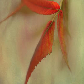 Annie  Snel - A touch of Autumn