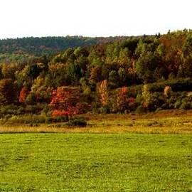 Bonita S Sylor  - A Touch of Fall