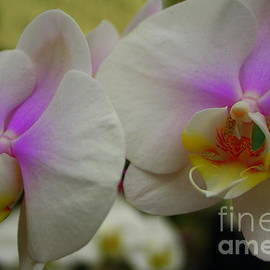 Photographic Art and Design by Dora Sofia Caputo - A Touch of Purple - Orchid