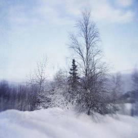 Priska Wettstein - A Tree In The Cold