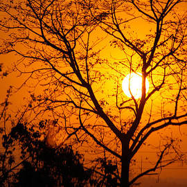 Nageshwar Tiwari - A tree is trying to capture the sun