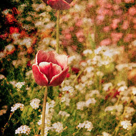 Loriental Photography - A Tulip