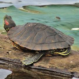 Dan Sproul - A Turtles Life