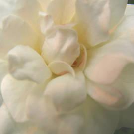 Brooks Garten Hauschild - A Vision in White