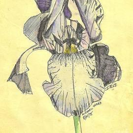 Michael Hoard - A Wild Lavender Louisiana Iris
