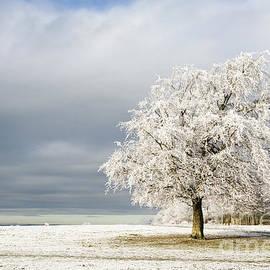 Anne Gilbert - A Winter