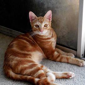 Chris Gudger - A Young Beautiful Cat