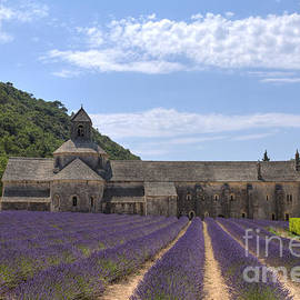 Abbey of Senanque with lavender field