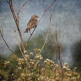 Dale Kincaid - Above The Prairie