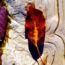 Lisa Holland-Gillem - Abstract Autumn