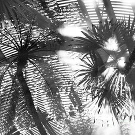Roselynne Broussard - Abstract Palms