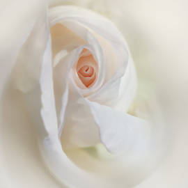 Jennie Marie Schell - Abstract Pastel Rose Flower