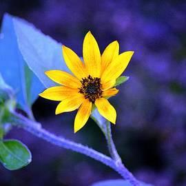 Karen  Majkrzak - Abstract Sunflower