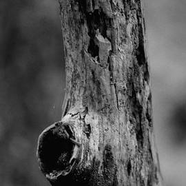 Maria Urso  - Abstract Tree Limb BW