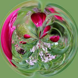 Cynthia Guinn - Abstract Tulip Colors