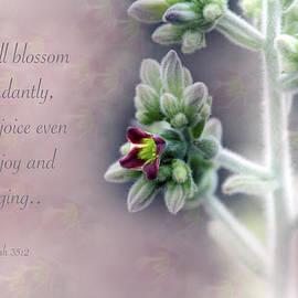 Debbie Nobile - Abundant Blossoms