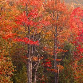 Stephen  Vecchiotti - Acadia Fall Colors