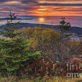 Priscilla Burgers - Acadia National Park Sunrise