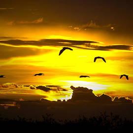 Mark Andrew Thomas - Across the Sky