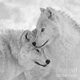 Joshua McCullough - Wolf Love