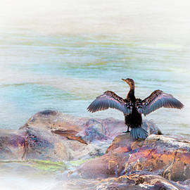 Ronel Broderick - African Darter in Kruger National Park